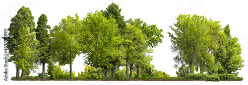 Foto Cutout tree line