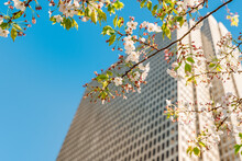 A Tall Business Building With A Branch Of A Flowering Tree With Flowers On A Blue Sky Background