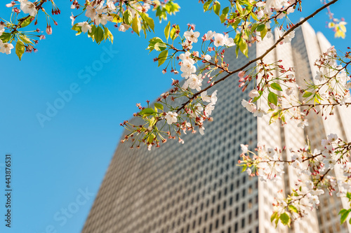 Fotografija A tall business building with a branch of a flowering tree with flowers on a blu