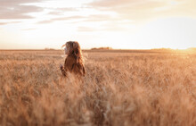 Portrait Of Girl In A Field With Wheat