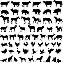 Big Collection Of Farm Animals - Vector