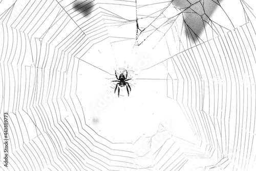 Illustration of a spider weaving a web Fototapet