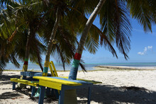 Bahamas- Colorful Picnic Tables Under Palm Trees, By The Sea