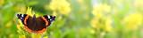 Fototapeta Natura - Schmetterling 898