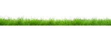 Beautiful Lush Green Grass On White Background. Banner Design