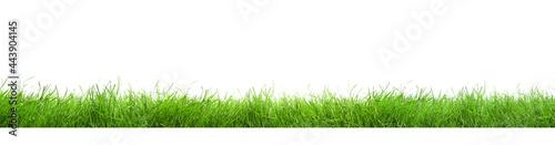 Slika na platnu Beautiful lush green grass on white background. Banner design
