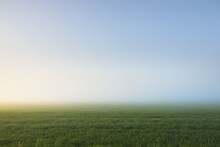 Green Country Field (lawn) And Forest In A Fog At Sunrise. Idyllic Summer Rural Scene. Soft Sunlight. Nature, Environment, Ecology, Ecotourism