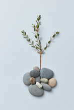 Twigs And Small Stones