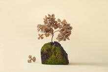 Tree Bark Piece And Dry Flowers