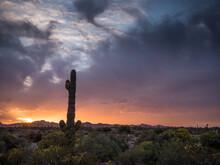Saguaro Cactus At Sunset In The Desert Of Arizona
