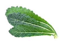 Black Kale, Italian Kale, Tuscan Kale, Lacinato, Dinosaur On White Background