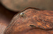 The Microscopic Insect World Through The Lens, Spider