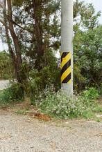 A Telephone Pole Between A Roadside Tree