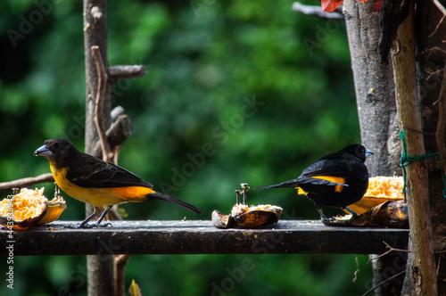 Fotografía Birds in my house.
