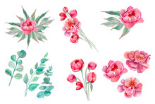 Peony. Collection Of Watercolor Hand-drawn Romantic Flowers