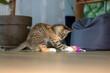 mały kotek bawi się pluszową zabawką