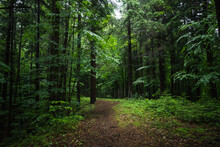 Forest Path And Tall Trees In A Beautiful Natural Park Reservation