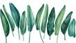 Leinwandbild Motiv Tropical set, palm leaves on isolated white background, watercolor botanical illustration, green jungle plants