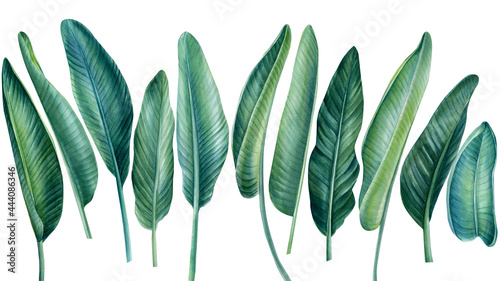 Fotografiet Tropical set, palm leaves on isolated white background, watercolor botanical ill