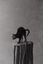 Bristling Kitten.