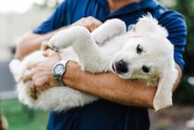 Golden Retriever Puppy In Mans Arms