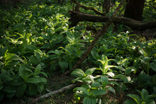 The Sun Shines On The Forest Plants