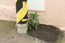 Green Plants On The Roadside
