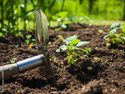 Fotografie, Tablou A chopper stuck in the ground next to a cucumber sprout.