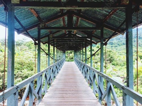 Photo View Of Footbridge In Forest