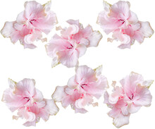 Pink Hibiscus Flower Pattern