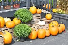 Pumpkins And Crates