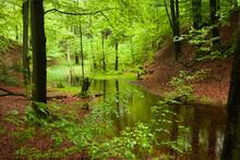 Im Wasser Eines Tümpel Im Wald Spiegelt Sich Das Lichtdurchflutete Grüne Laub Des Waldes.