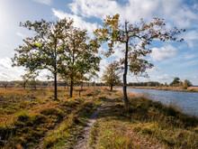 Footpath And Water Pool In Peat Bog National Park Dwingelderveld, Drenthe, Netherlands