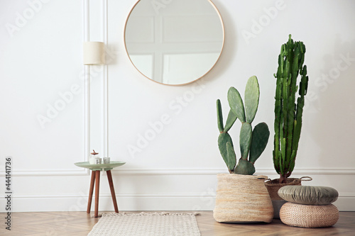 Fotografie, Obraz Stylish room interior with beautiful potted cacti