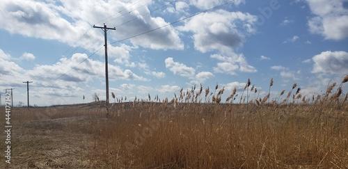Fotografia, Obraz Vast Open Fields Of Golden Wheat Grass Strum The Power Lines Above Like A Guitar