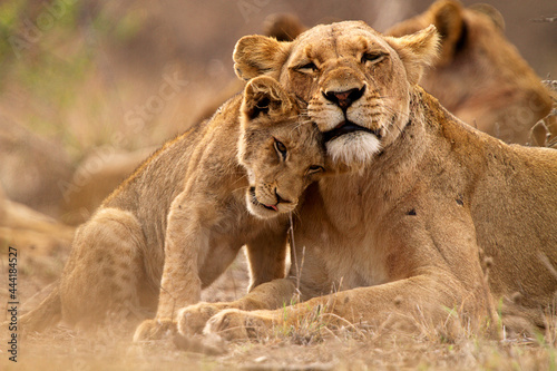Canvastavla lioness and cubs