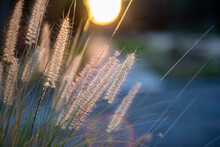 Close-up Of Stalks Of Fountain Grass In Field Against Sky