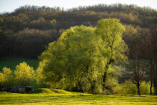 Trees With Green Leaves. Summer Sunny Day. Beautiful Nature.
