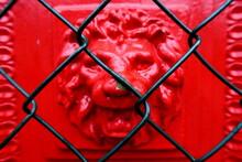 Full Frame Shot Of Lion Behind Chainlink Fence