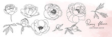 Peony Flower In Minimal Botanical Graphic Sketch Line Art Drawing, Trendy Tiny Tattoo Design, Floral Elements Vector Illustration