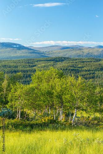 Fotografija Birch tree grov