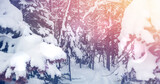 Image of winter scenery landscape with light spots forest fir trees covered in snow