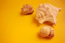 Three Seashells On A Yellow Background