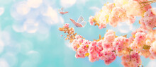 Beautiful Sakura Flower Blooming Tree, Butterflies On Light Sky Background. Shallow Depth. Soft Pastel Vintage Pink Toned. Spring Nature. Springtime Cherry Blossom Panorama. Copy Space Banner.