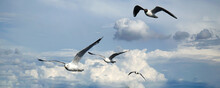 Birds Gulls Flying In A Flock In The Sky In White Clouds