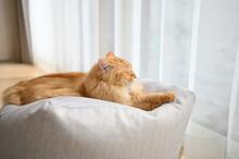 ビーズクッションでくつろぐ猫(マンチカン)