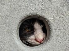 Cat In A Hole