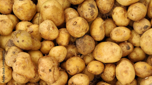 Obraz na plátně Young potatoes close-up top view, background from potatoes, unwashed dirty potat