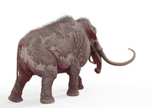Mammoth Walking Rear View In White Background