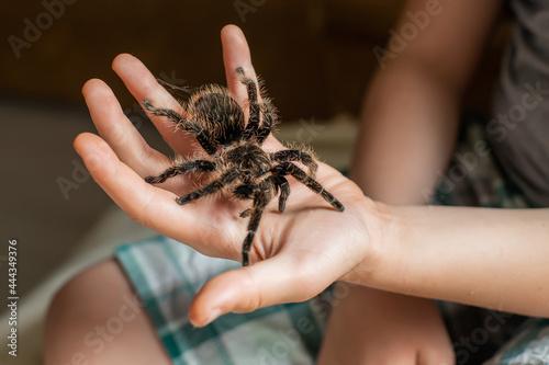 Fotografia large tarantula on child's arm. scary spider crawls over a boy.